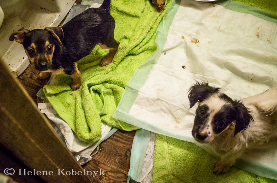 gia and bitsy in puppy poop (1 of 1)