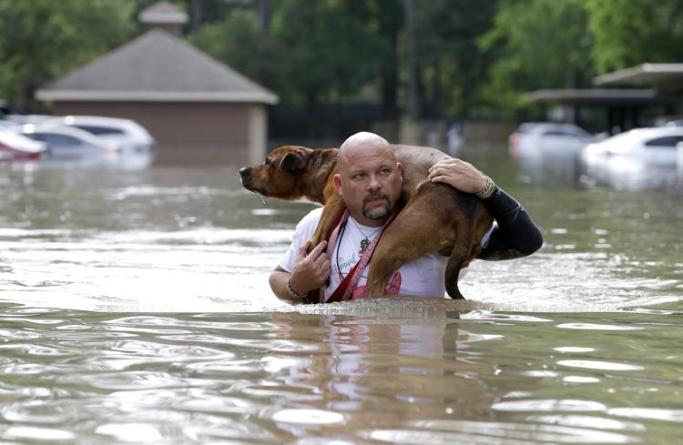 "HELP and ""Caveats"" for Houston Pets 